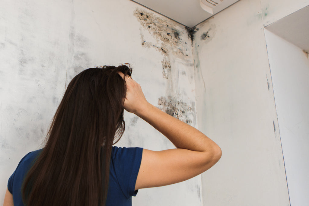 Mold Versus Mildew | Your Home Air Quality Matters