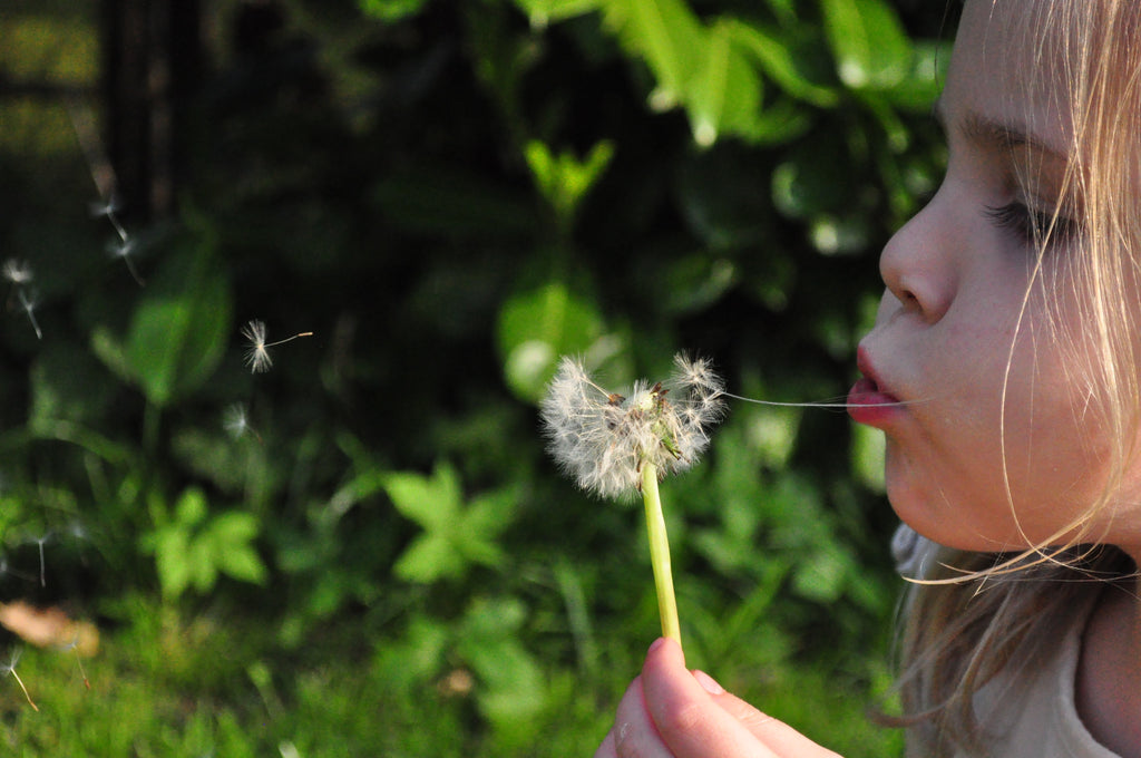 7 Ways to Beat Spring Allergies in Your Home