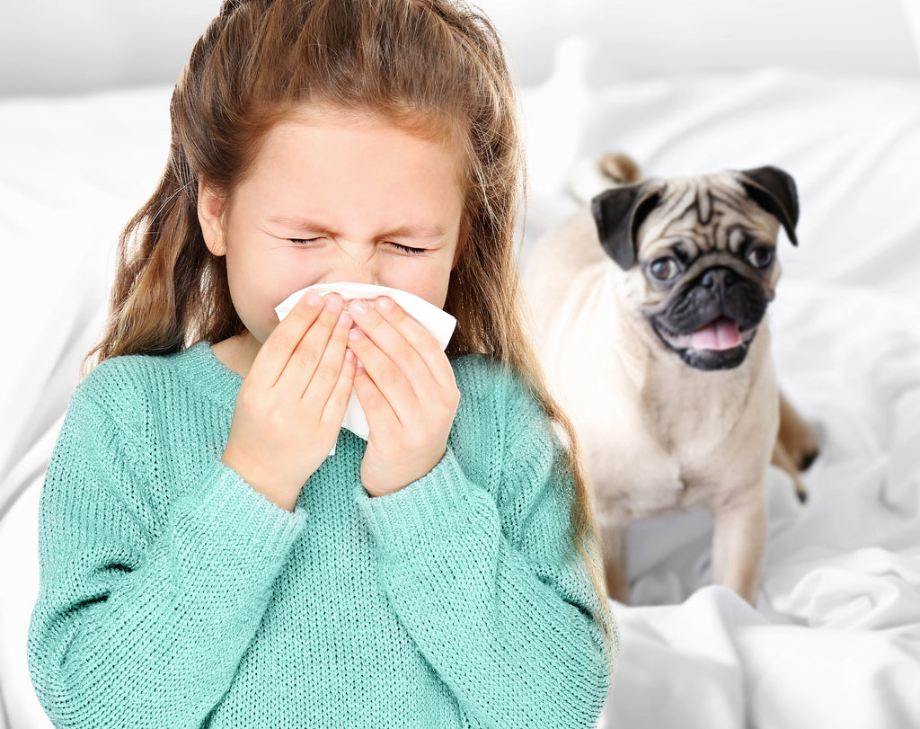 Your pets may affect your indoor air quality