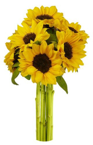 7 stem Yellow Sunflowers, No Vase