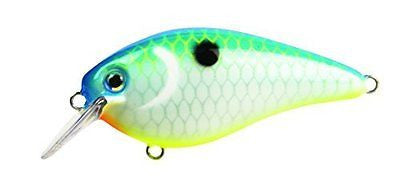 Strike King KVD1.5 Square Bill Crankbait Citrus Shad 2 1/2