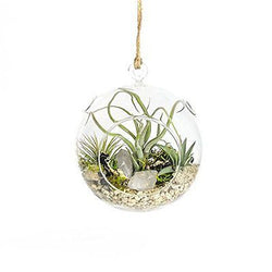 Crystal Air Plant Terrarium, 6