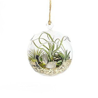 "Crystal Air Plant Terrarium, 6"" Hanging Sphere"