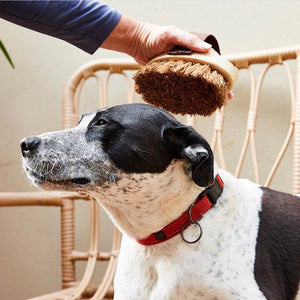 PET | Animal Grooming Brush - Biodegradable Coconut Fibre - KISS Skin Care | Australia, Pet Products, by Elementary & Bugsy