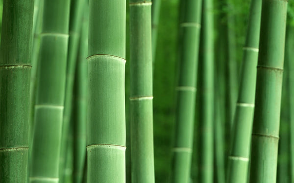 6 reasons to switch to bamboo cotton