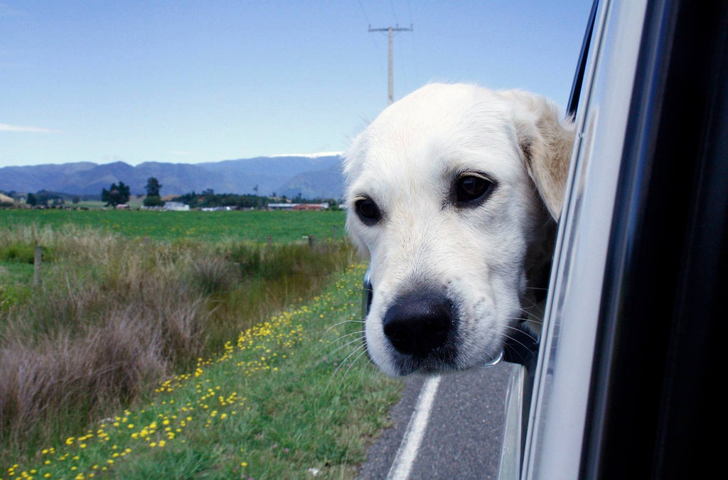 How to Travel with Your Dog this Summer