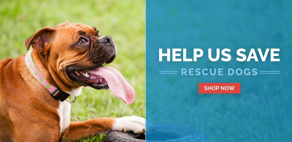 Paws For A Cause Save Rescue Dogs