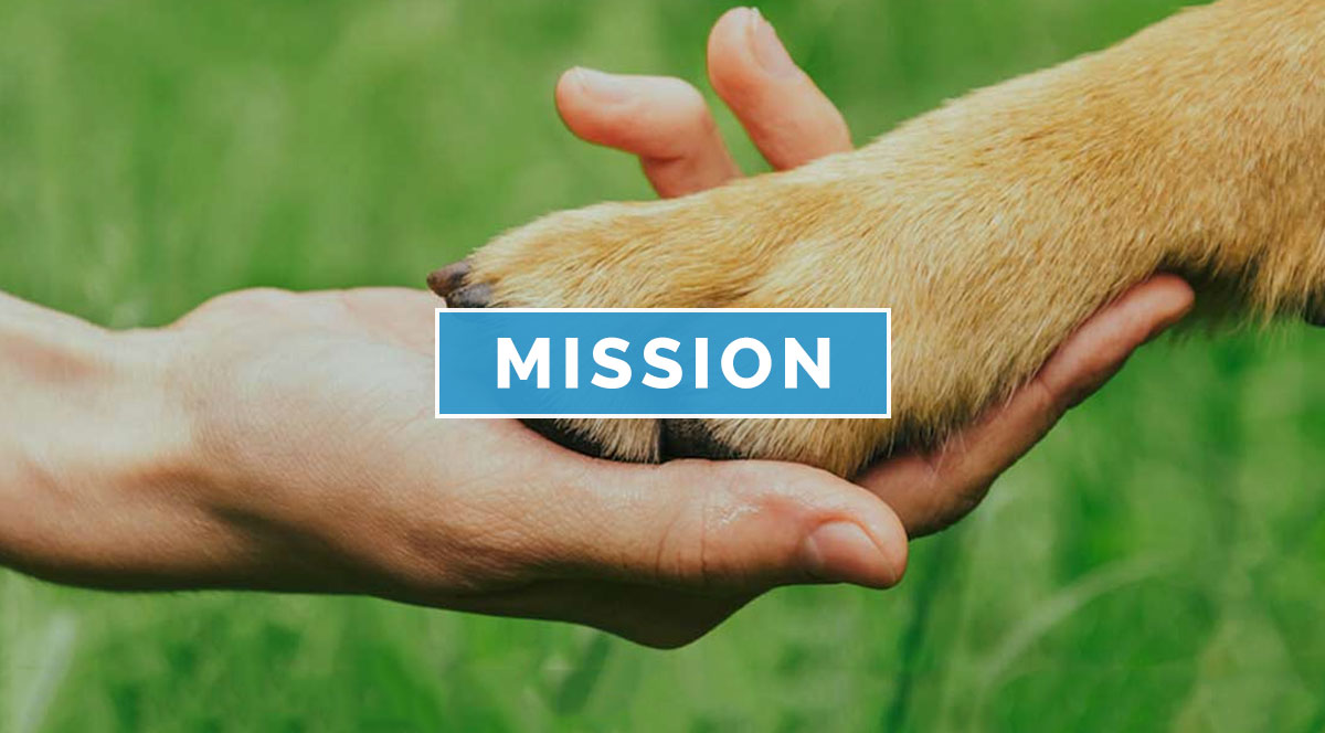 Paws For A Cause Mission Rescue Dogs