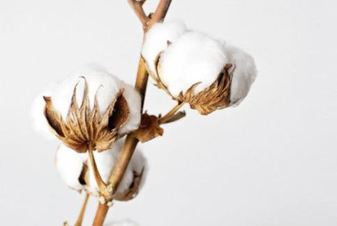 How buying organic cotton is important for your health and for the Earth