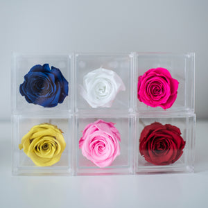Acrylic box with single Rose