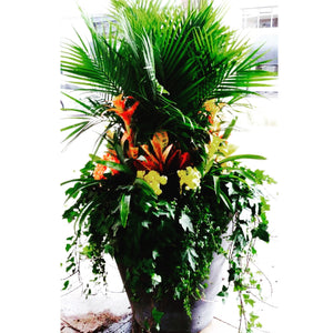 Tropical Planter starting from