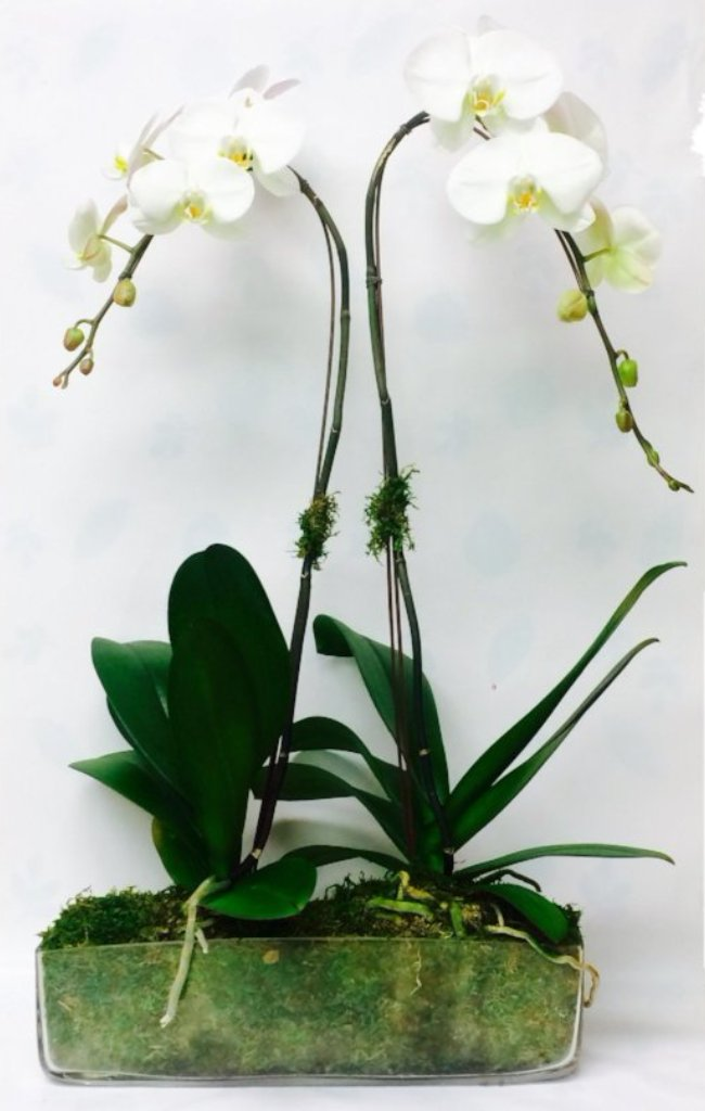 2 Orchids in clear glass container