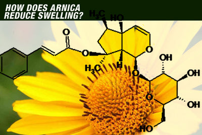 How does Arnica Reduce Swelling?