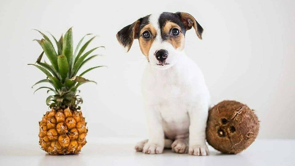 Pineapple And Coconut Dog Biscuit Recipe