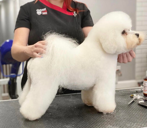 create a suitable grooming space for your dog at home