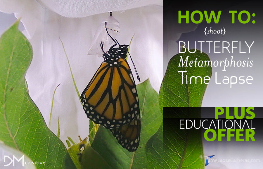 How To - Caterpillar to Butterfly Metamorphosis, Time Lapse