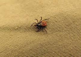 Early Season Tick Prevention Preparation
