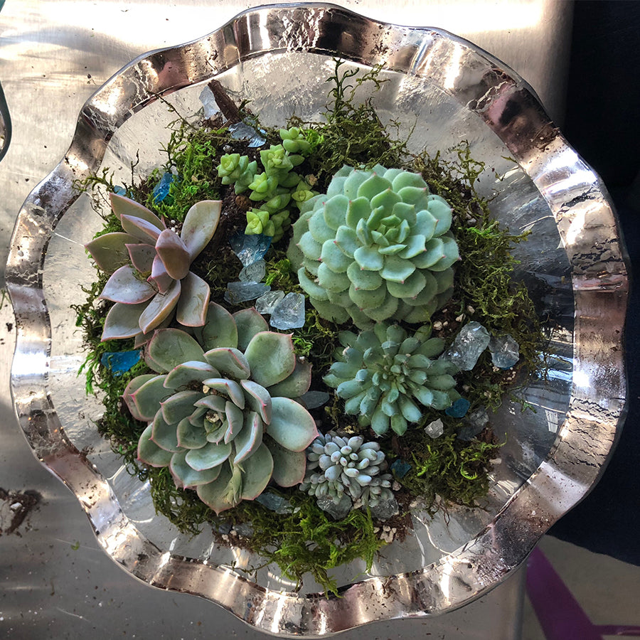 POSTPONED - Succulent Arrangement Workshop (4/11)