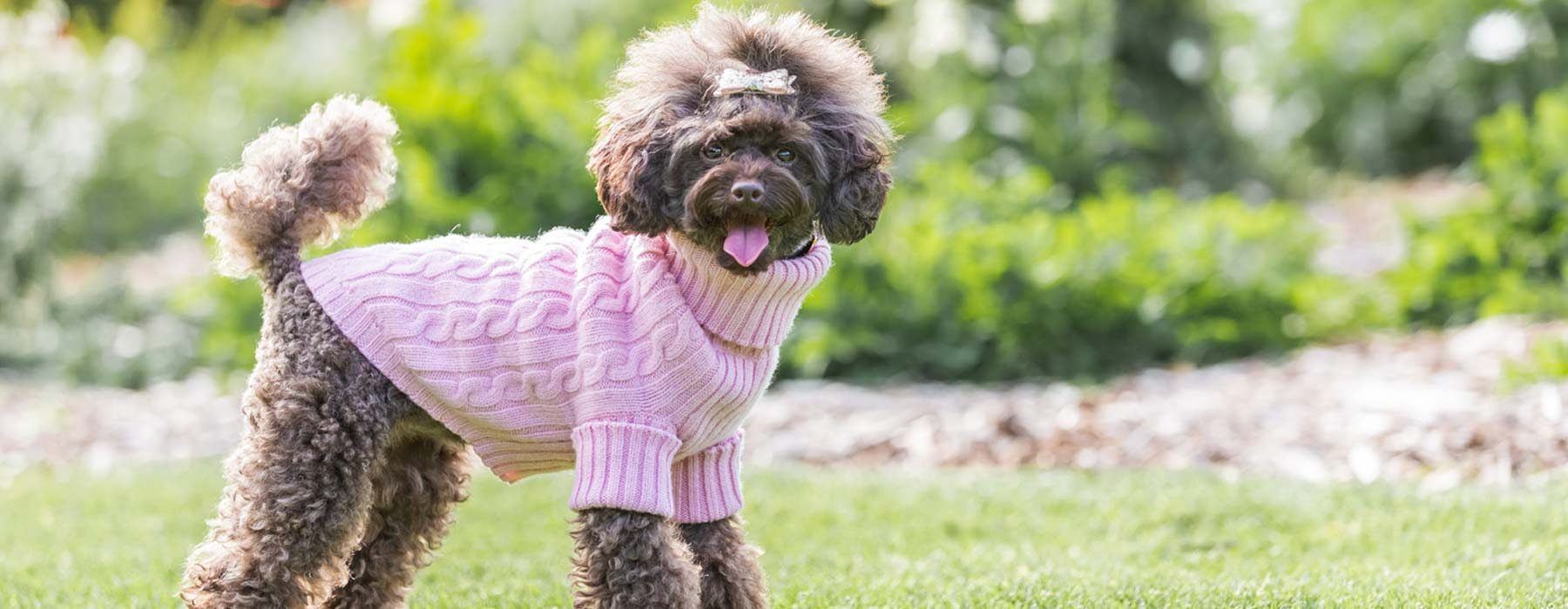 Merino Wool Dog Jumpers / Sweaters