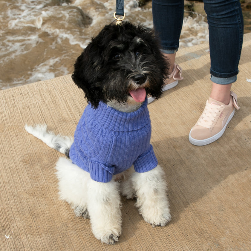 Merino Wool Dog Jumper