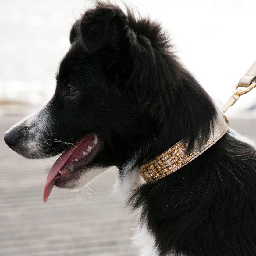 Swarovski Crystals Dog Collars | Australia Wide Delivery