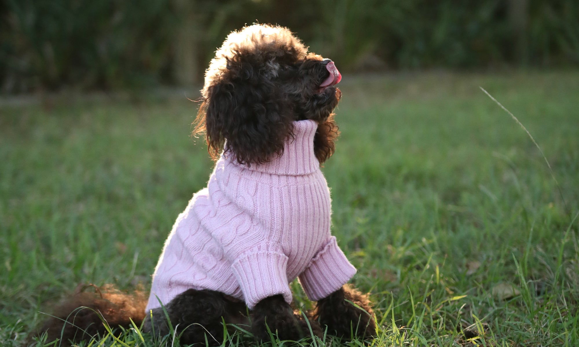 Merino Wool Dog Jumper | Sweater