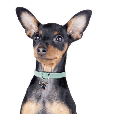 My Family Black & Tan Pinscher Dog I.D. Tags - 2B