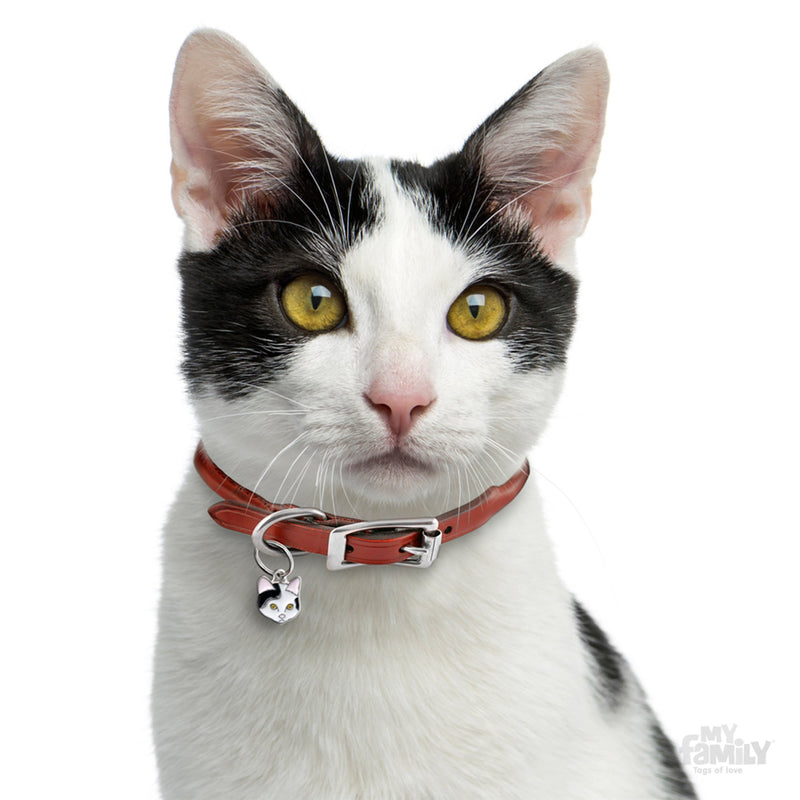My Family Black & White European Shorthair Dog I.D. Tags - 2B