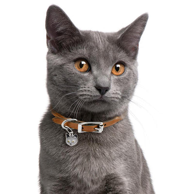 My Family Chartreux Dog I.D. Tags - 2B