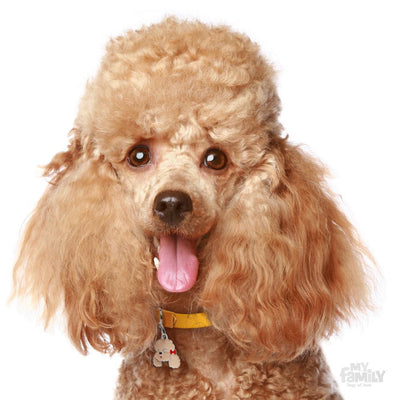 My Family Friends Apricot Poodle Dog I.D. Tag