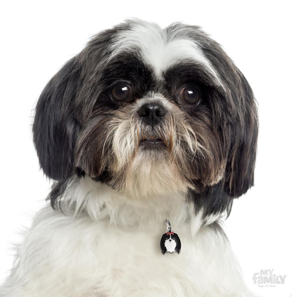 My family friends black and white shih tzu dog i d tag