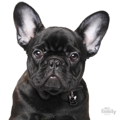 My Family Friends Black French Bulldog Dog I.D. Tag
