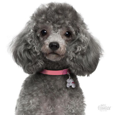 My Family Friends Grey Poodle Dog I.D Tag
