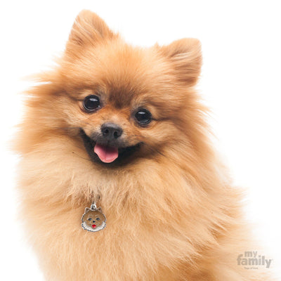 My Family Friends Pomeranian Dog I.D. Tag