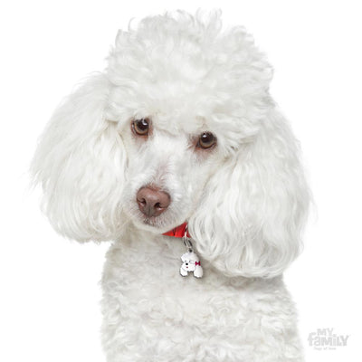 My Family Friends White Poodle Dog I.D Tag