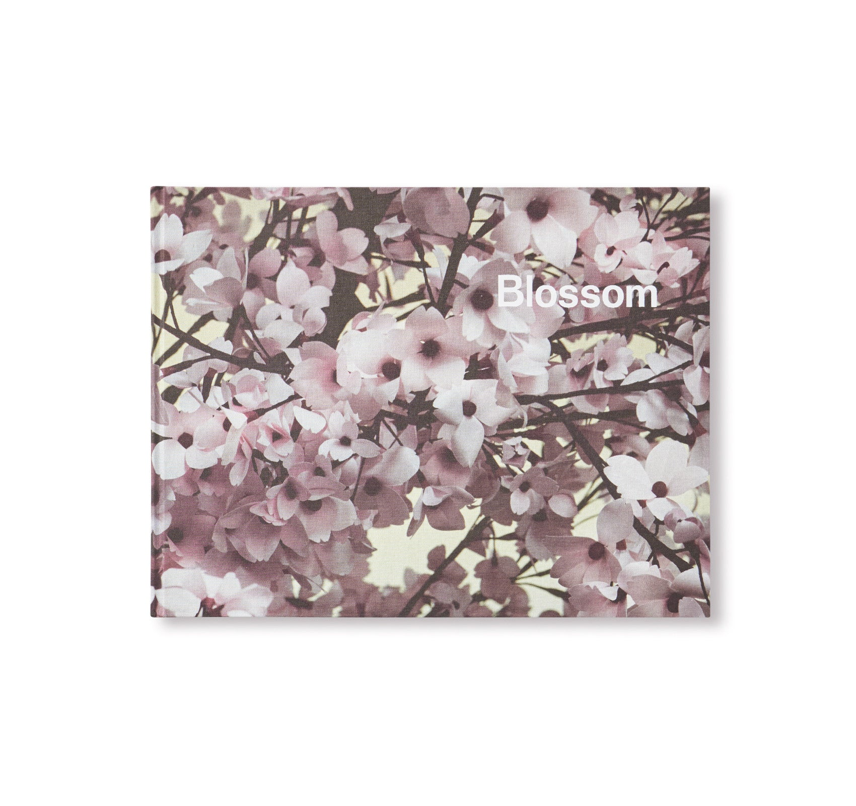 BLOSSOM by Thomas Demand & Ben Lerner