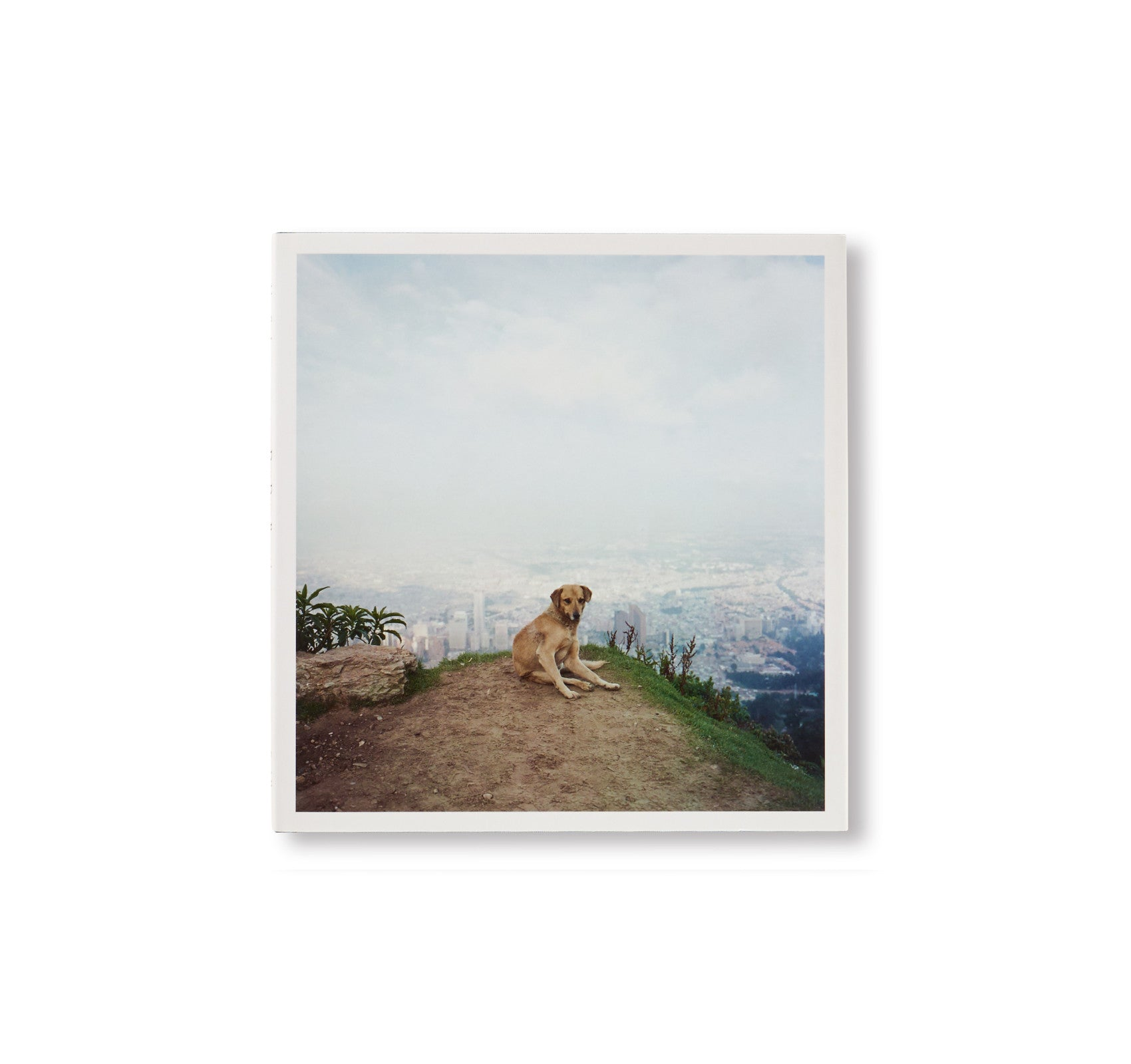 DOG DAYS BOGOTÁ by Alec Soth [SPECIAL EDITION]