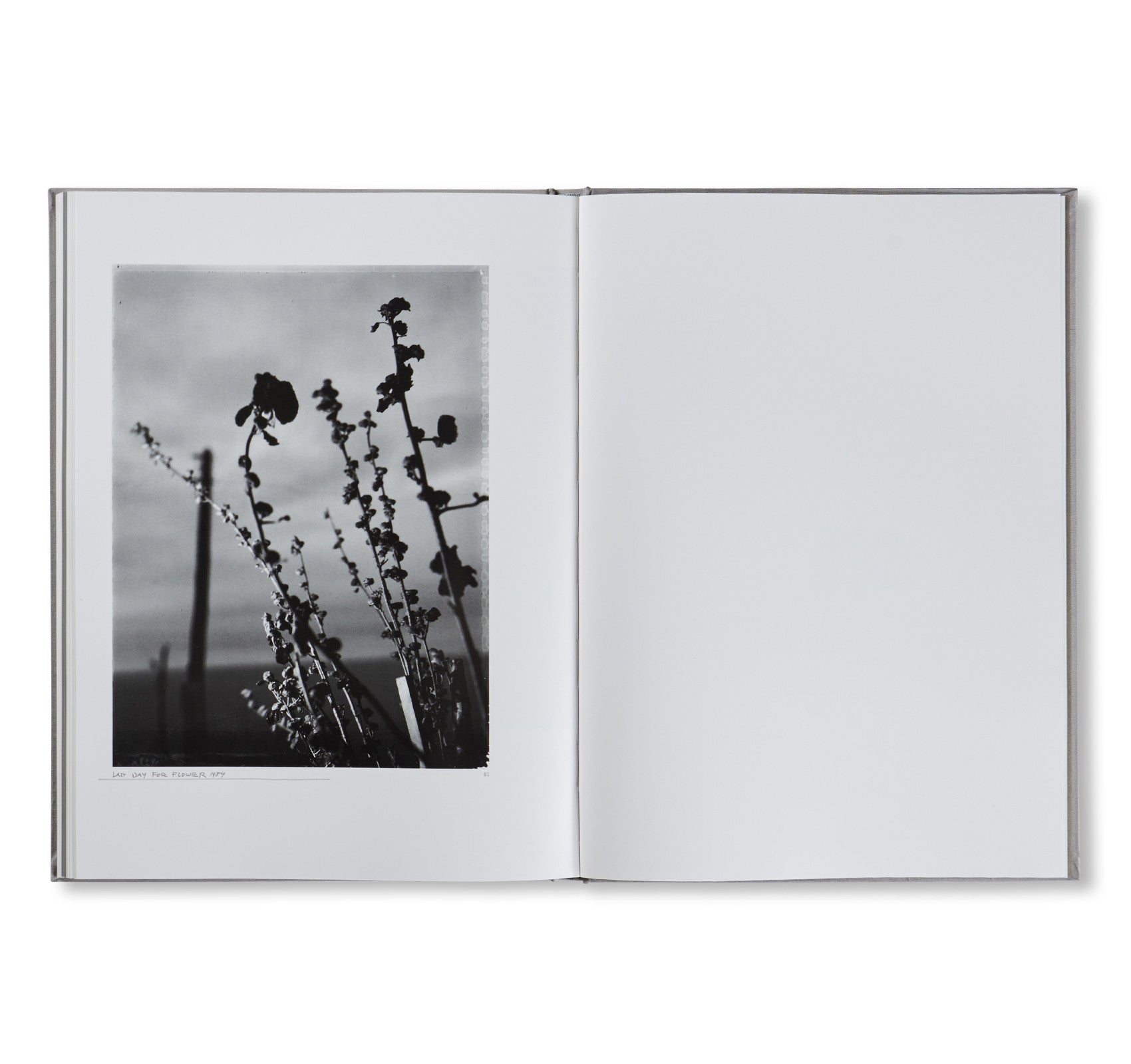 FLOWER IS… by Robert Frank