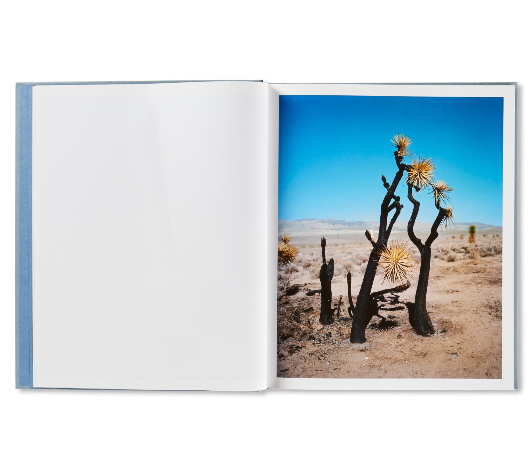 ZZYZX by Gregory Halpern [SPECIAL EDITION (HEAD) / SIGNED]