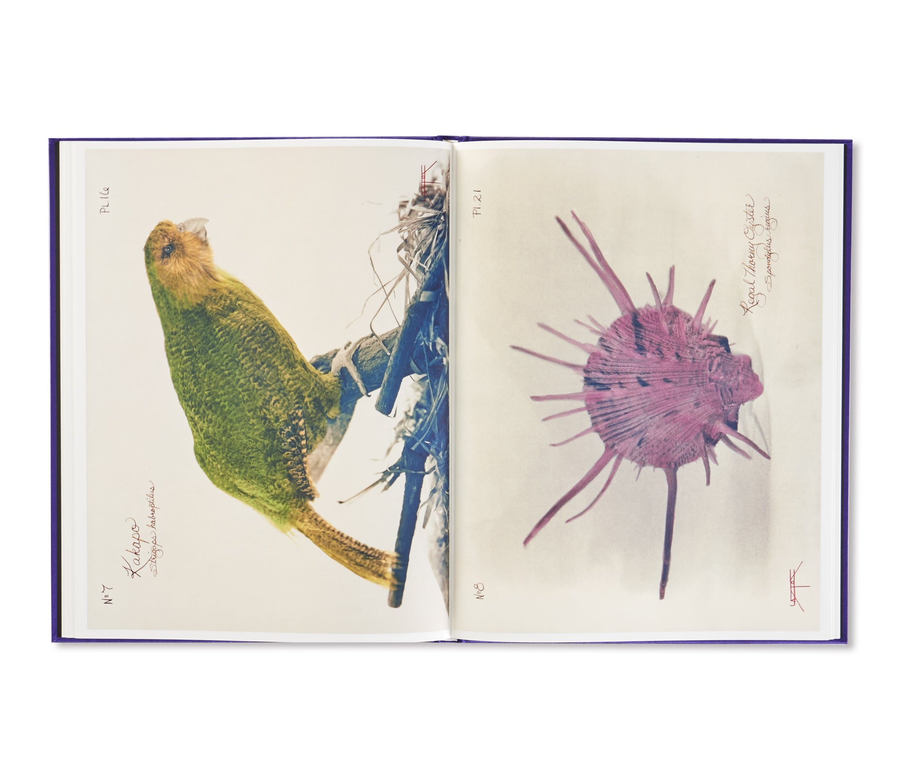 PICTORIAL ZOOLOGY by Laszlo Layton