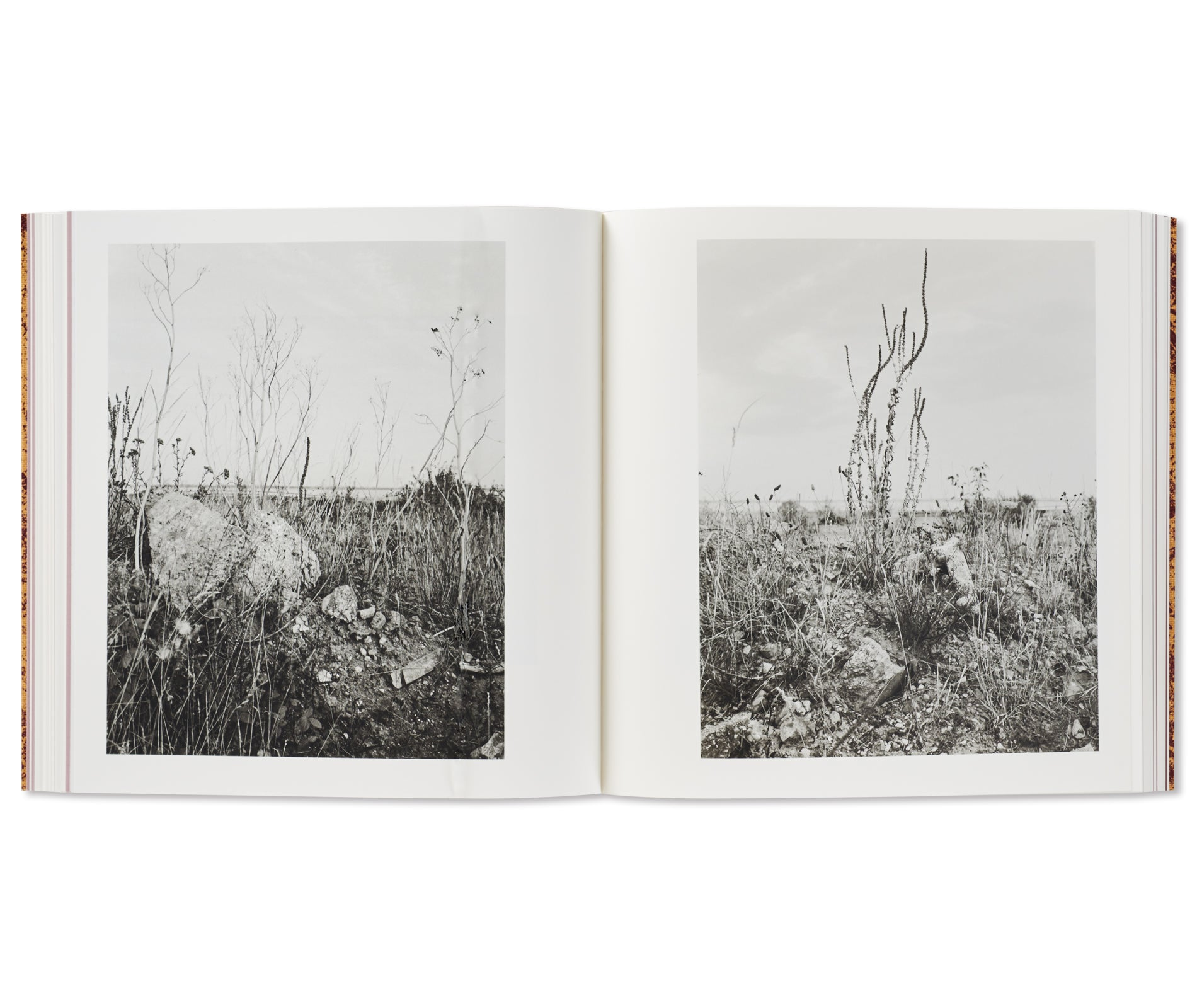 AND TIME FOLDS by Vanessa Winship [SIGNED]