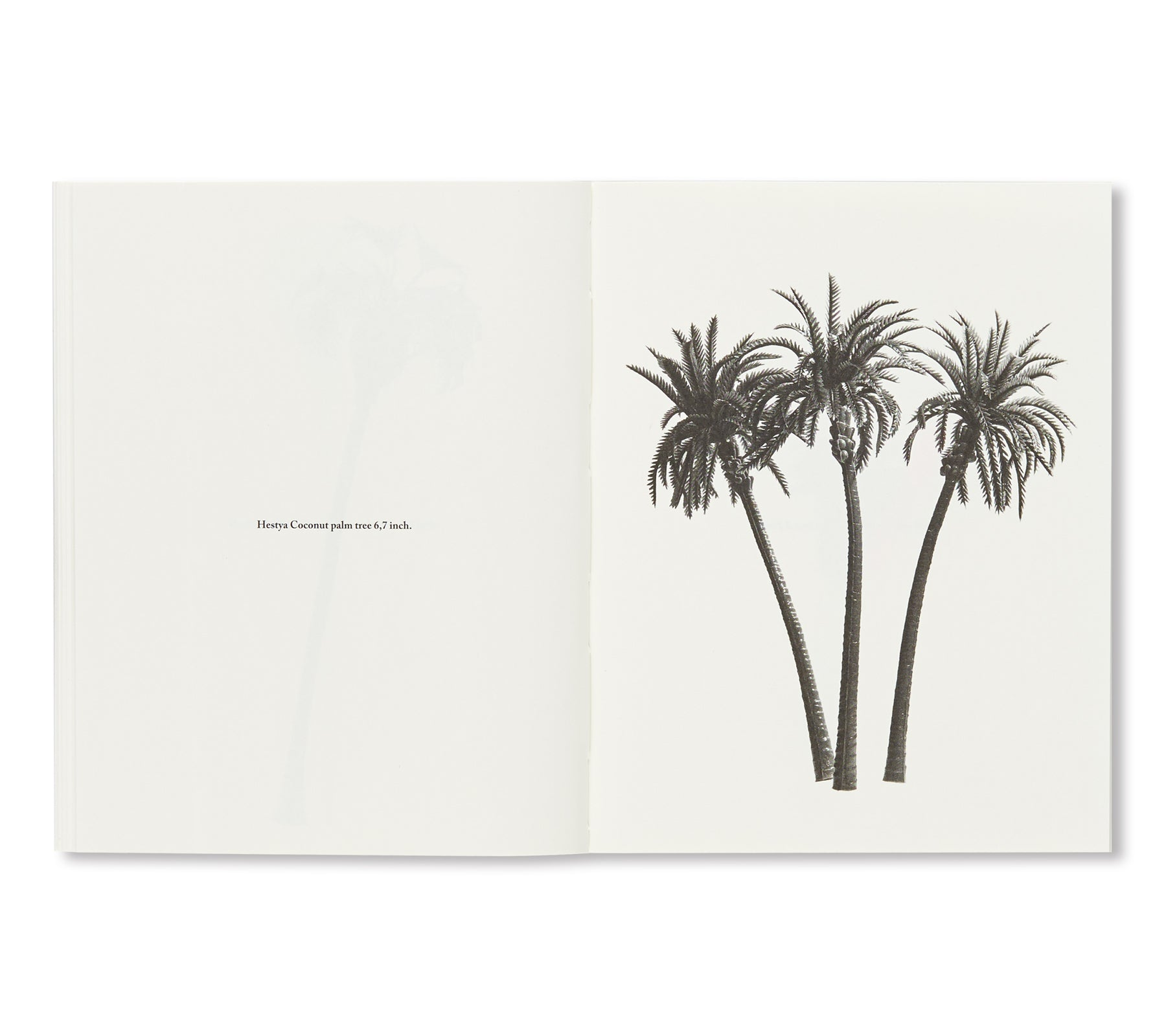 A FEW MODEL PALM TREES by Bruno Roles