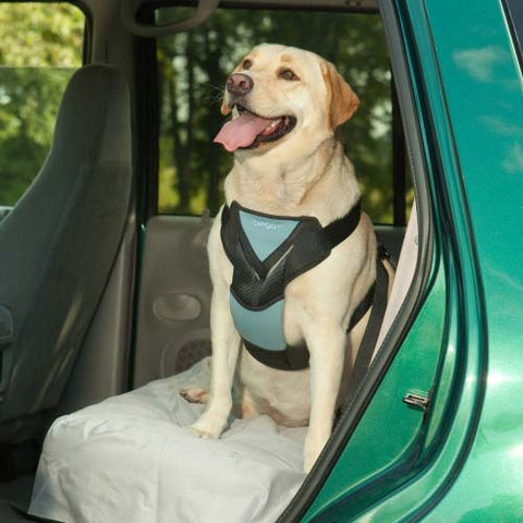 Bergan Dog Travel Harness Large Blue - Johnny's Pet Supply