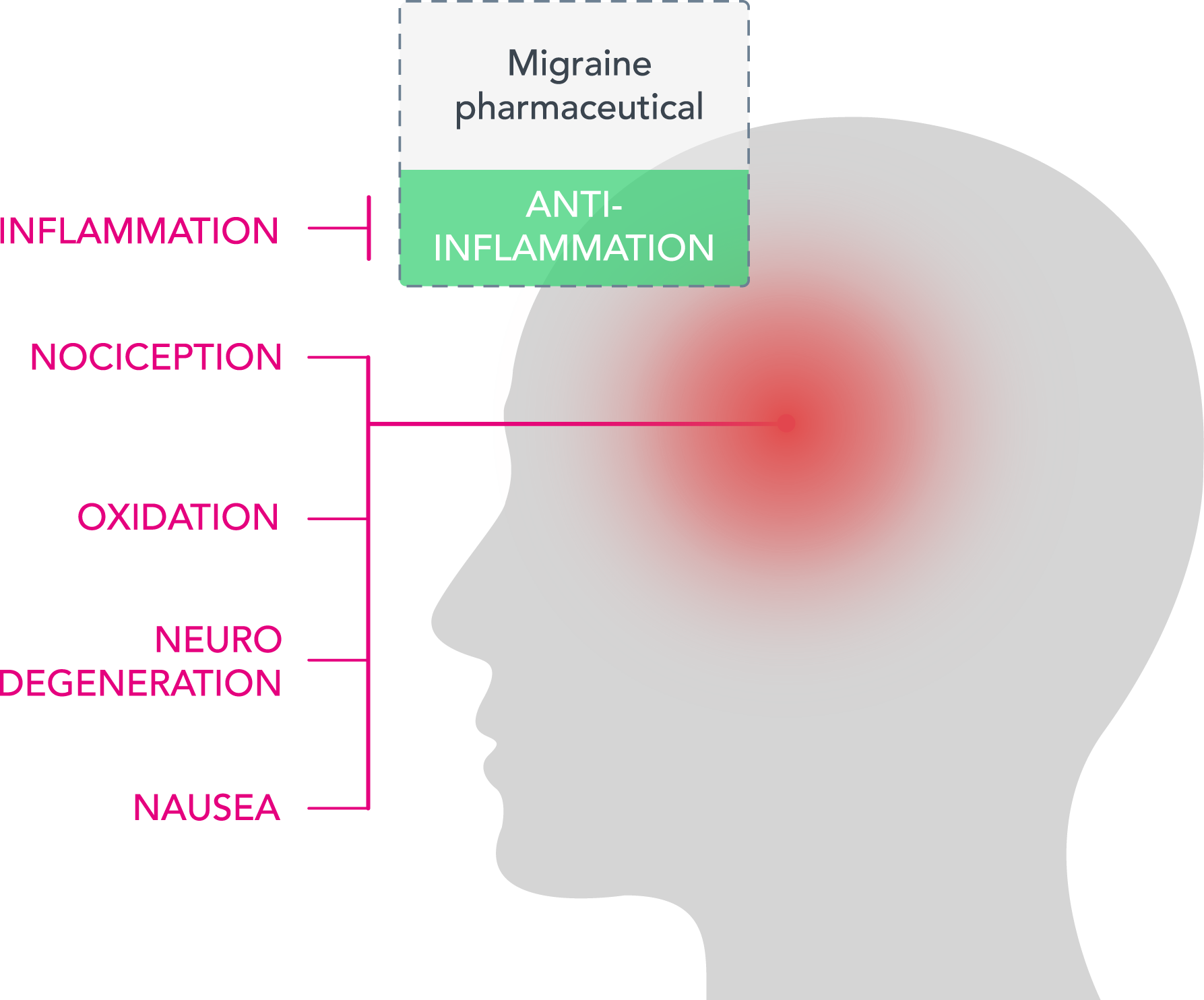 Mechanisms of migraine