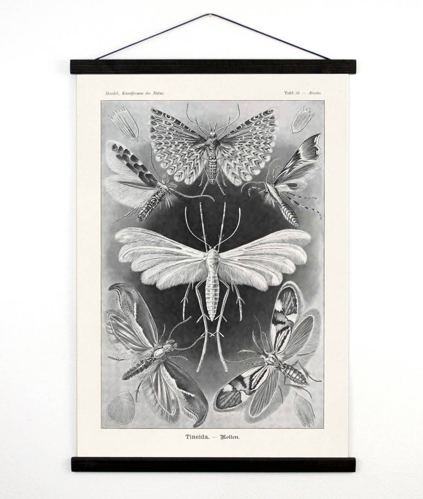 Vintage Moth Insect Canvas Wall Hanging