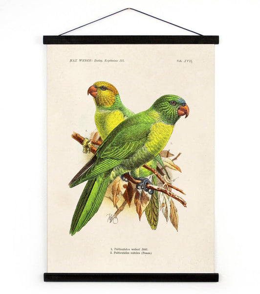 Vintage Parakeet Canvas Wall Hanging