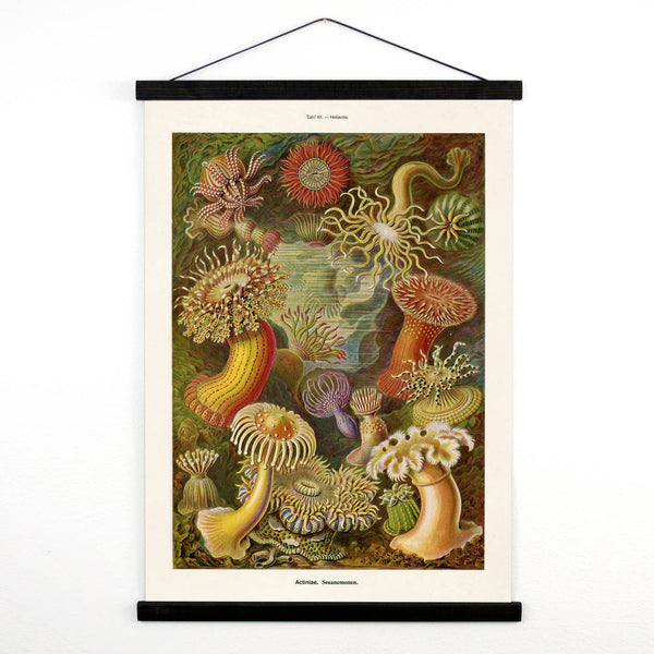 Vintage Sea Anemone Canvas Wall Hanging