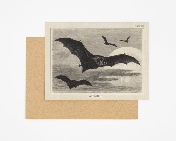 Bat Specimen Greeting Card