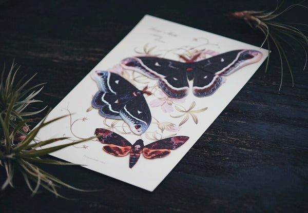 'Winter' Calleta Moth Set