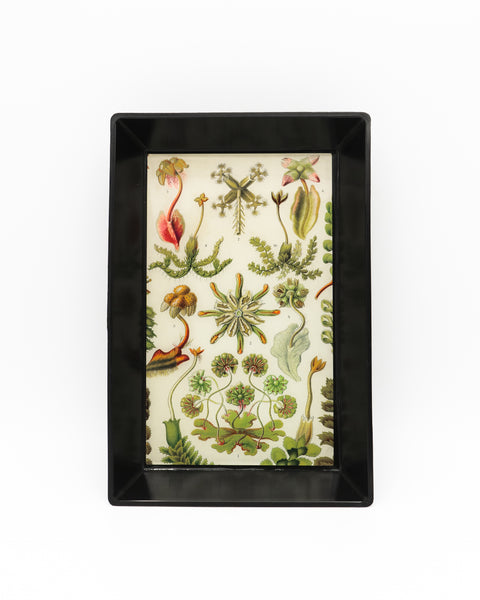 Botanical Art Trinket Tray (Large)